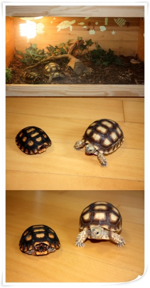 Yesung & Turtles