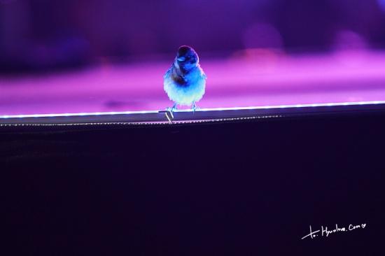 130615 SS5 Bird